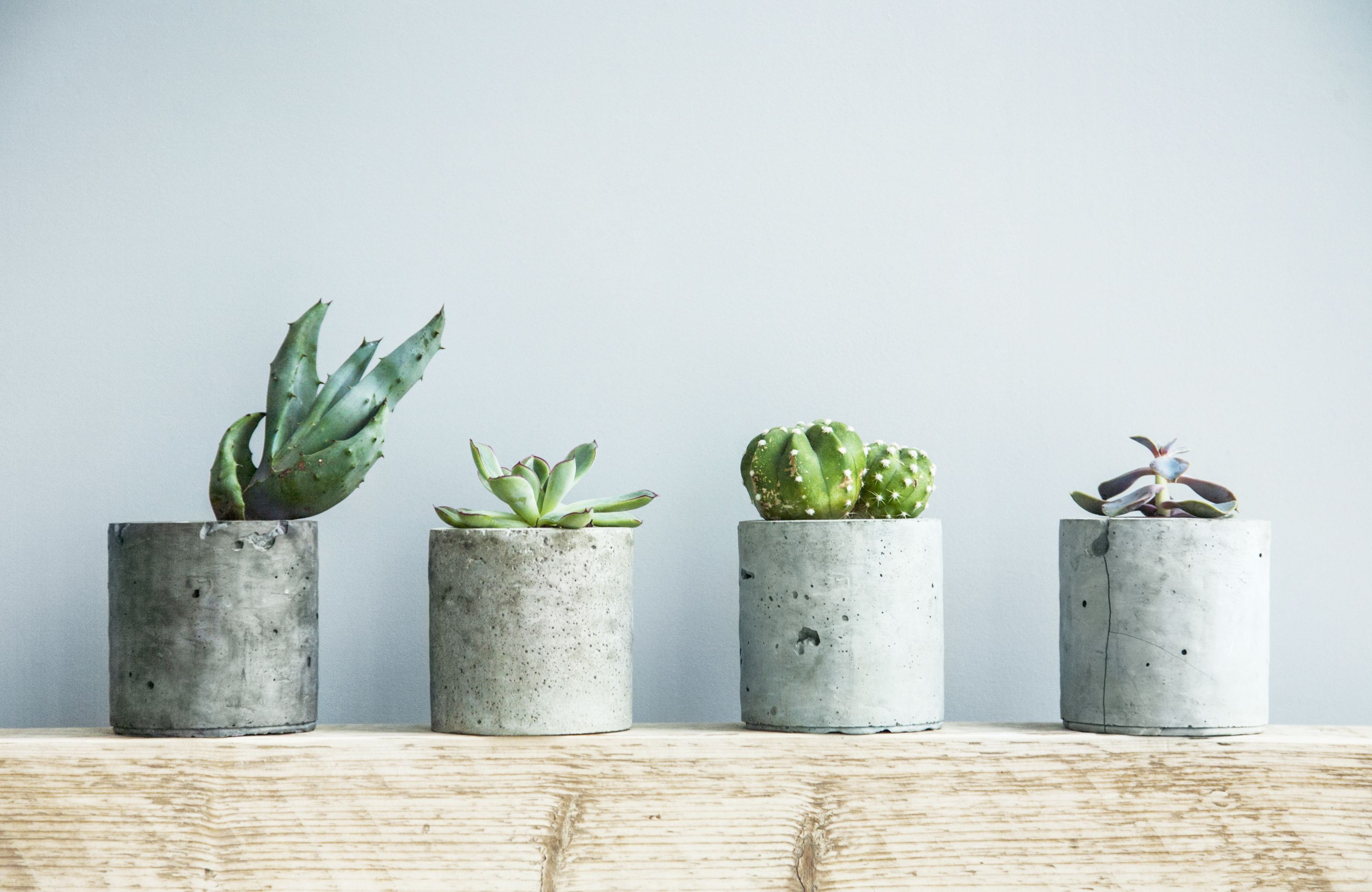 A row of potted plants